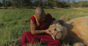 Geshe Phelgye Holding Cow